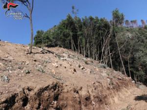 Mesoraca Abbatte alberi e ruba legna, beccato dai Carabinieri Forestali (1)