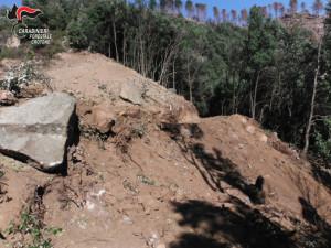 Mesoraca Abbatte alberi e ruba legna, beccato dai Carabinieri Forestali (2)